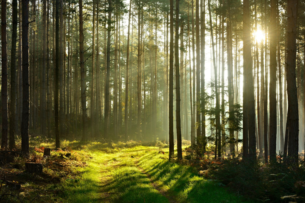 how much is a forest worth?