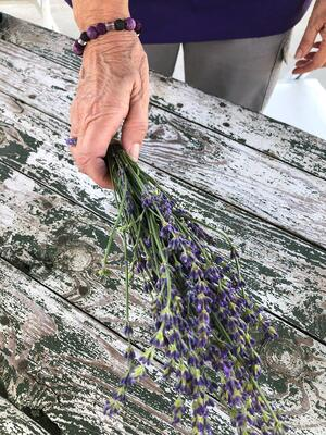 best varities of lavender for the south