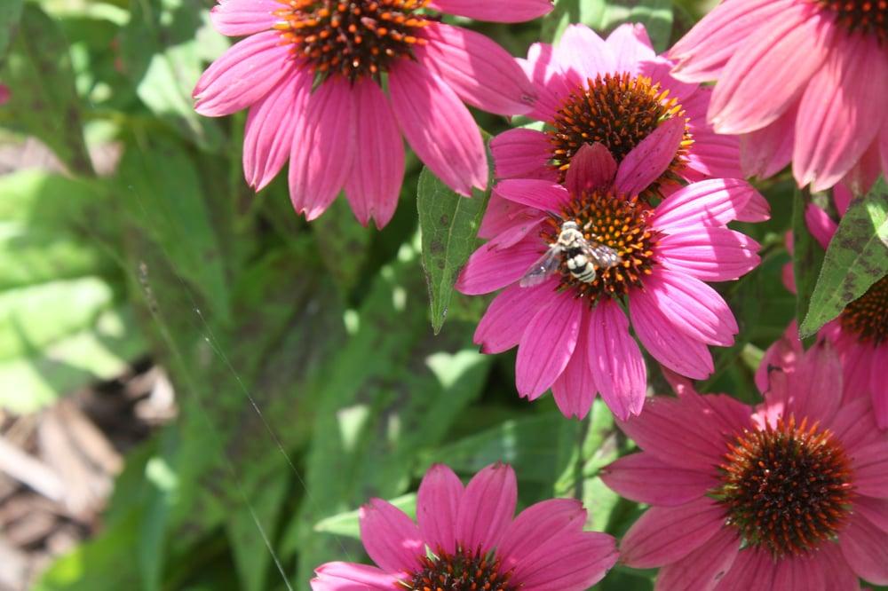 benefits of mason bees