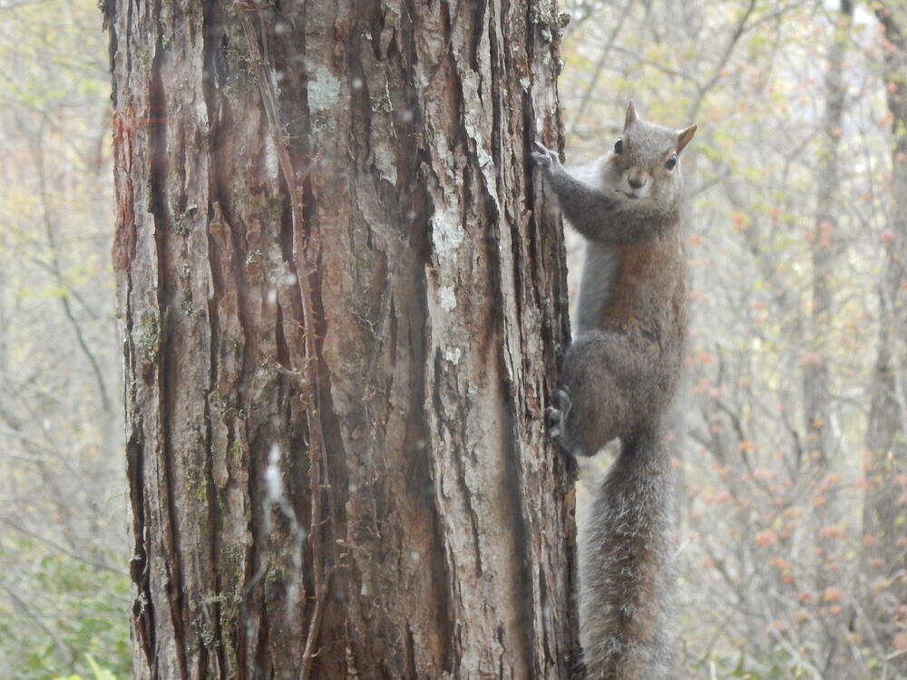 Squirrel mistakes
