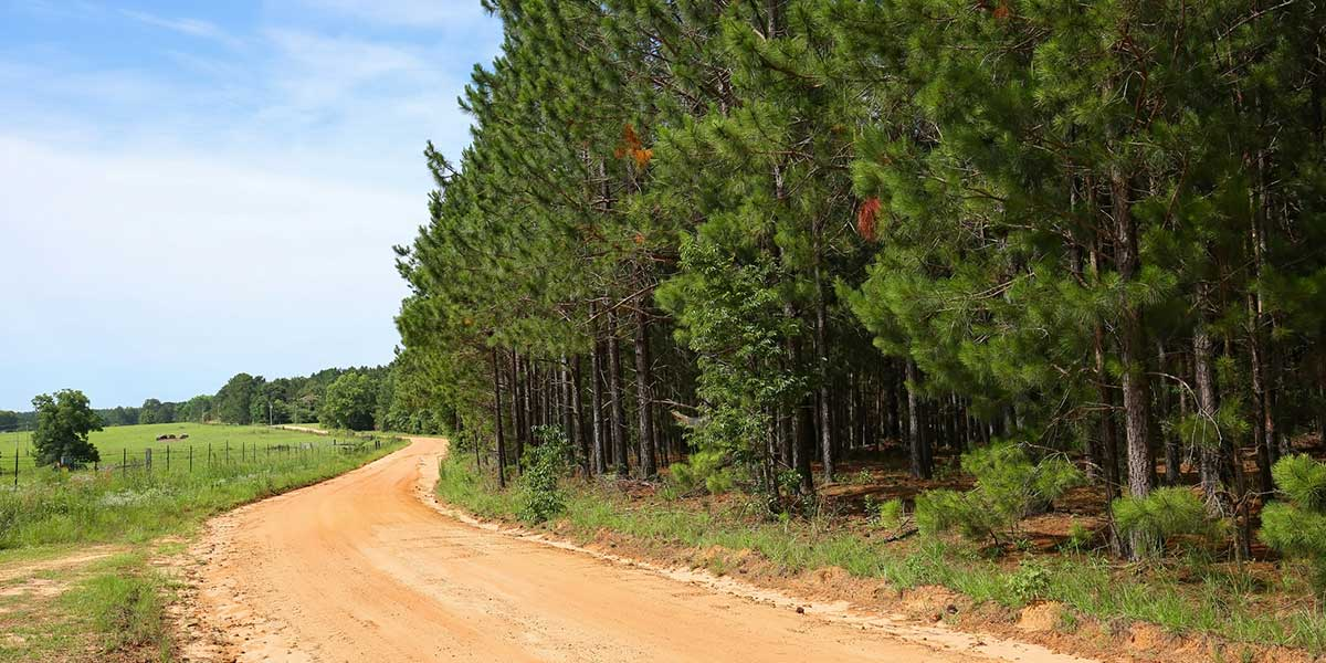 Country Dirt Road across Georgia property