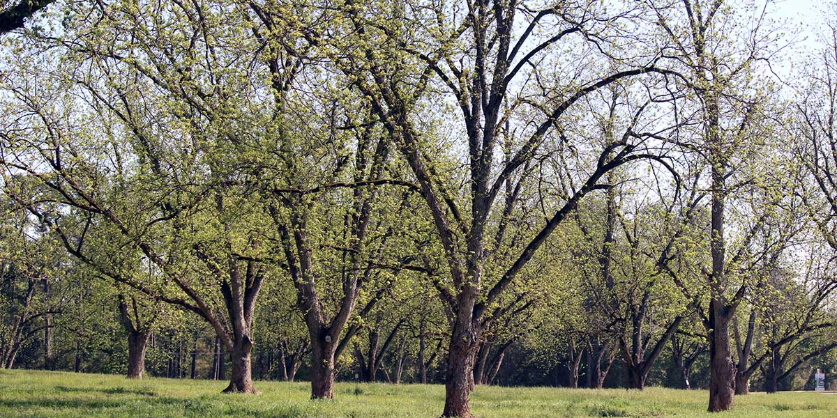 Field of trees on a Georgia Property