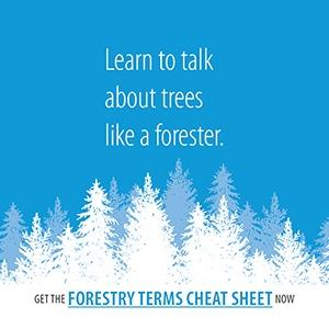 Learn common terms foresters use to understand tree health