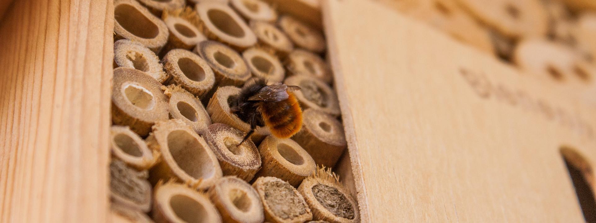 Meet the Mason Bee