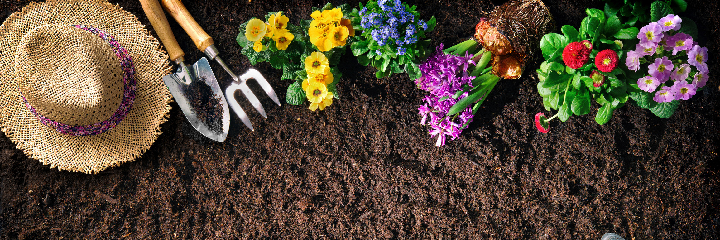 How to Beautify your Property with Ornamentals