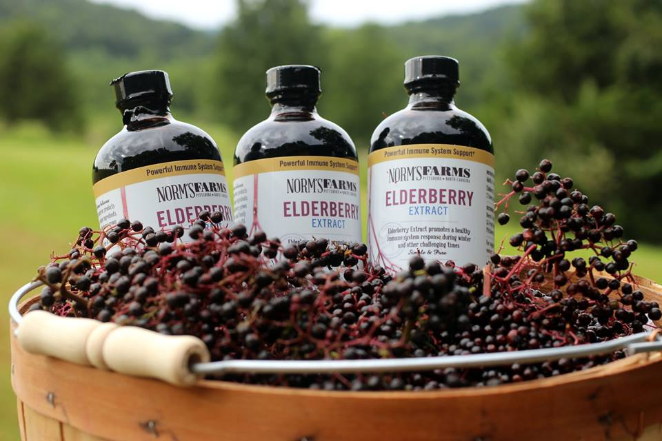 Elderberries—The Ultimate Cash-Crop for Your Rural Land
