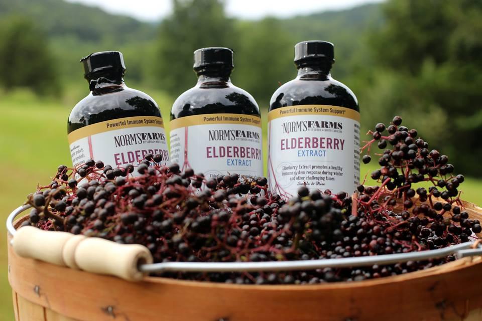 Elderberries—The Ultimate Cash-Crop for Your Rural Land