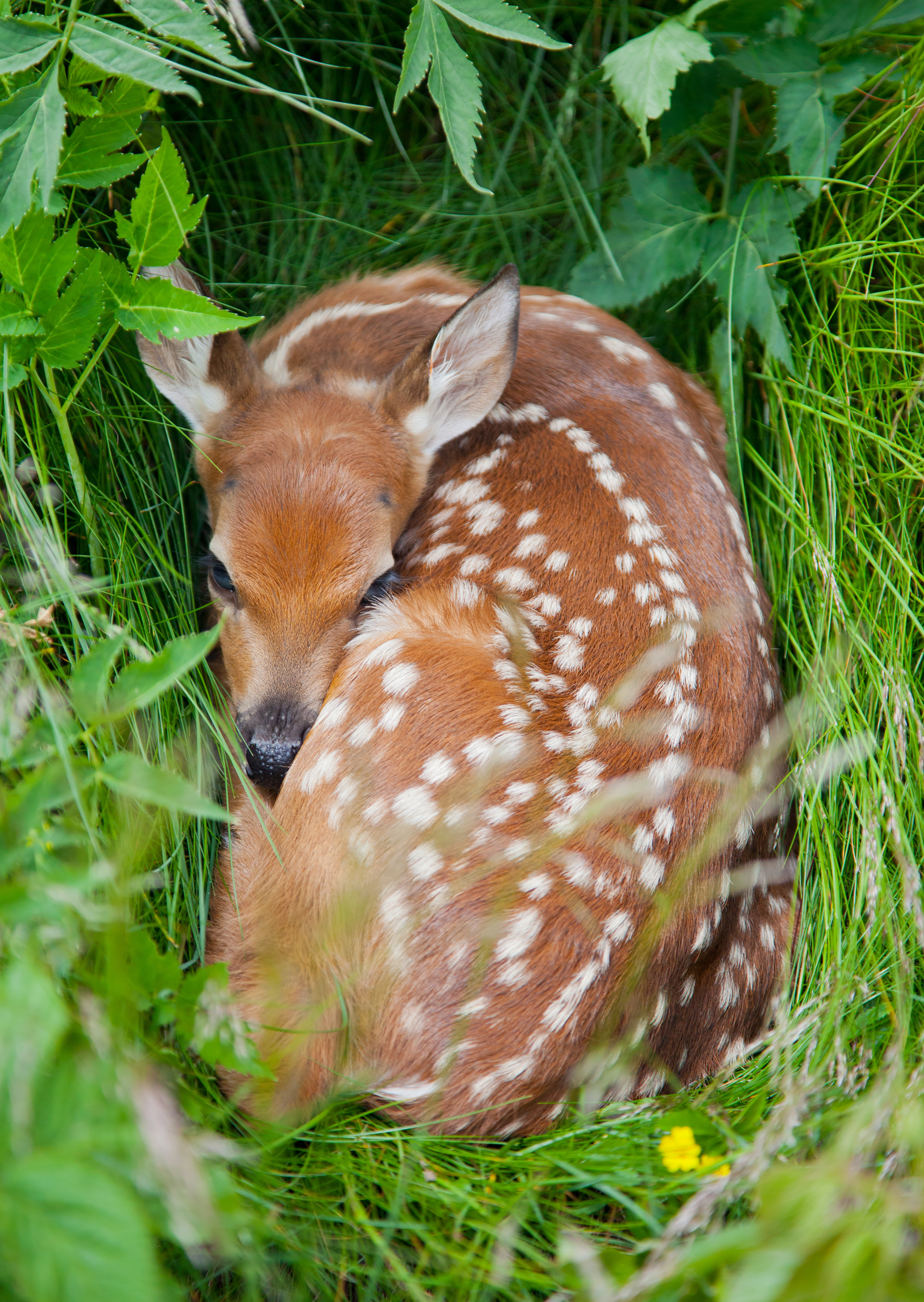 How to Attract Wildlife on Rural Property | Rethink:Rural