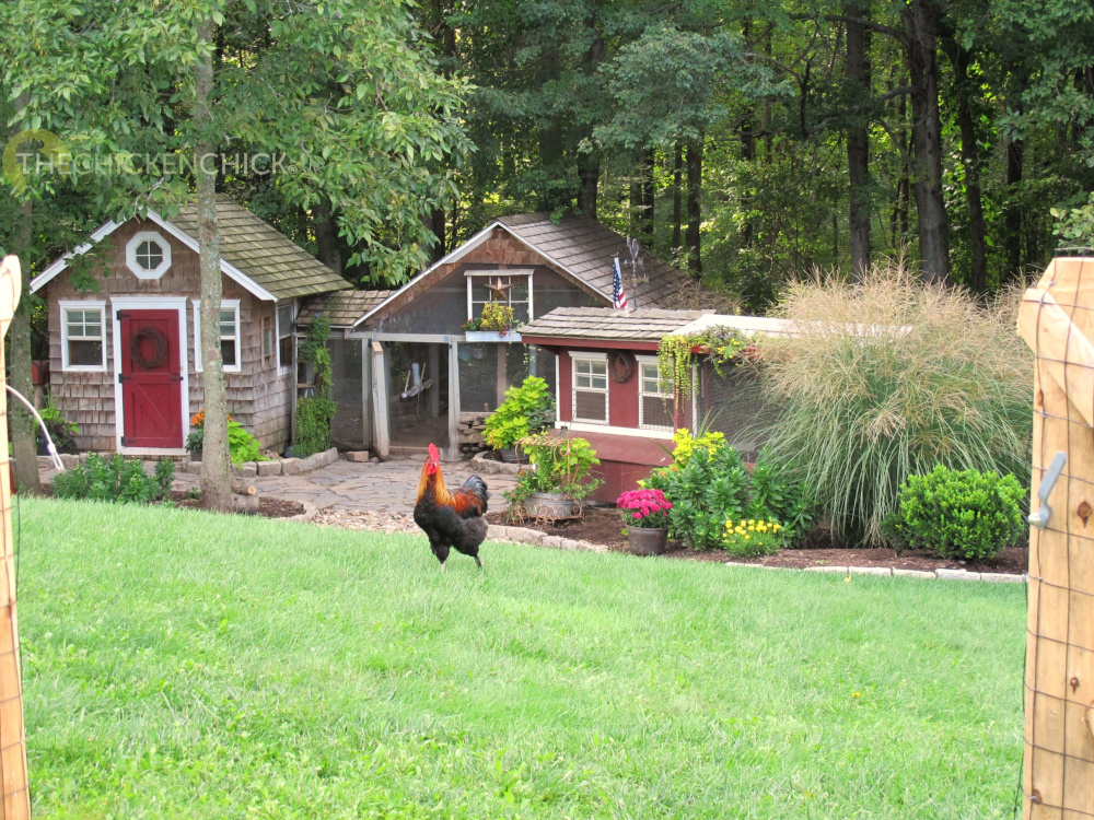 Raising Chickens: 10 Things to Know for Your Flock | Rethink:Rural