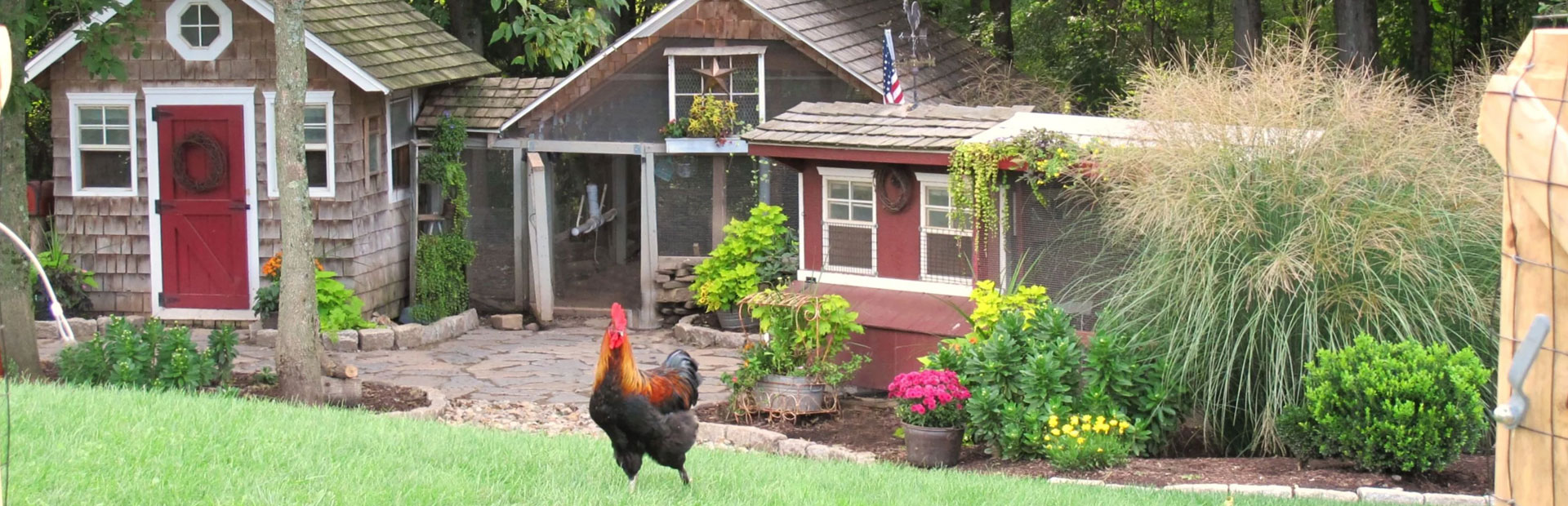Expert Tips on Raising Chickens