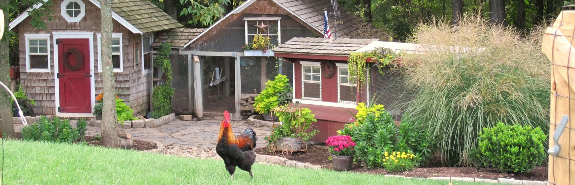 raising-chickens-slider.jpg
