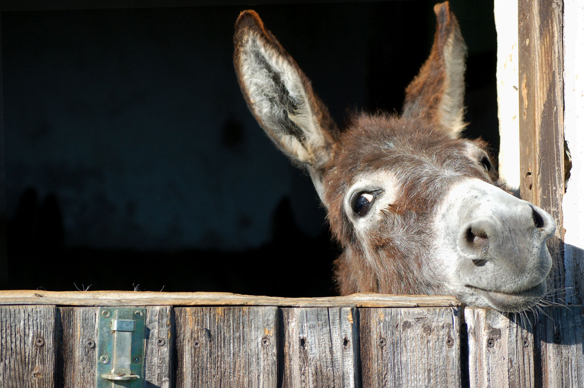 Should You Get a Donkey for your Rural Land?