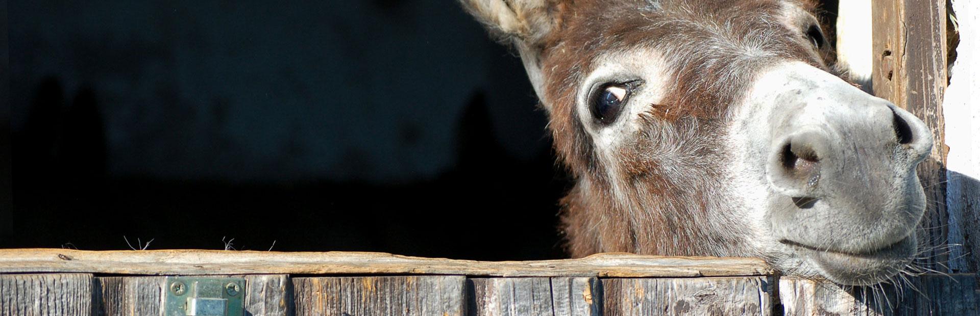 donkey-header-banner