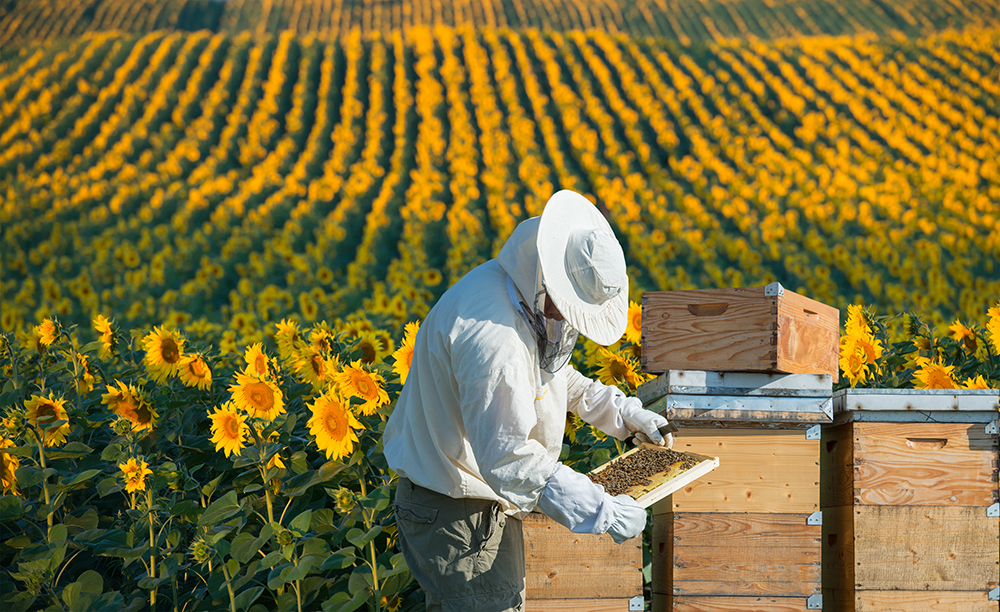 The Buzz About Beekeeping: How to Start A Hive of Your Own
