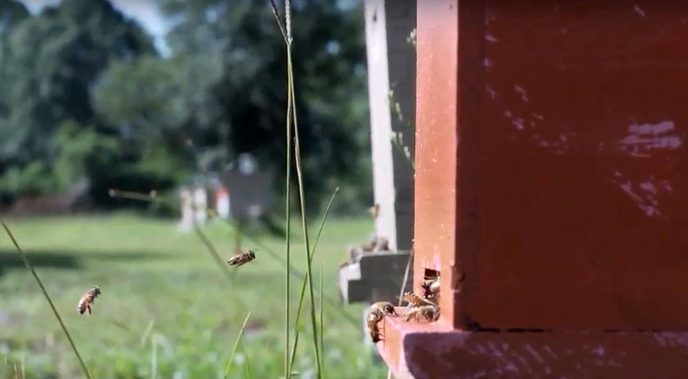 Karma Acres Farm Made Beekeeping Dream a Reality