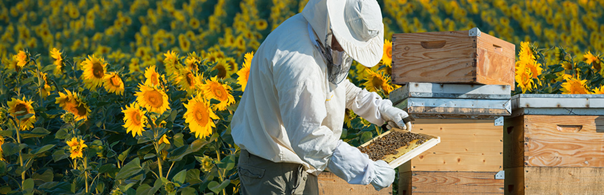 the-buzz-about-beekeeping