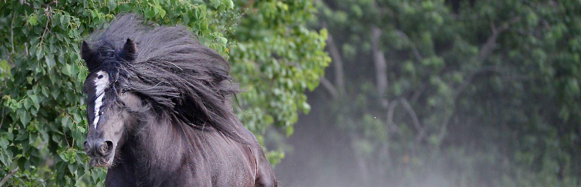 Aunique Ranch Slider.jpg
