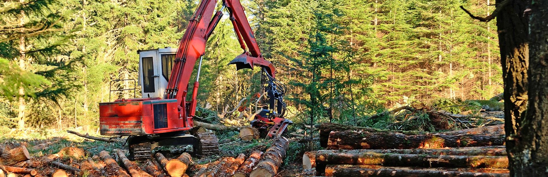 Slider_Repurpose_Wood_Cleared_from_Acreage.jpg
