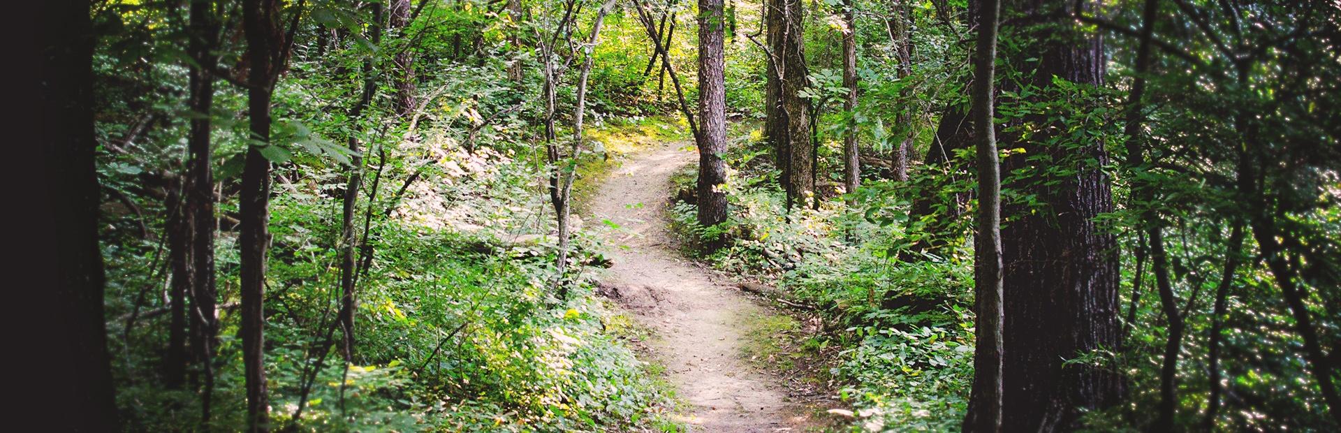 Slider Clearing a Trail.jpg