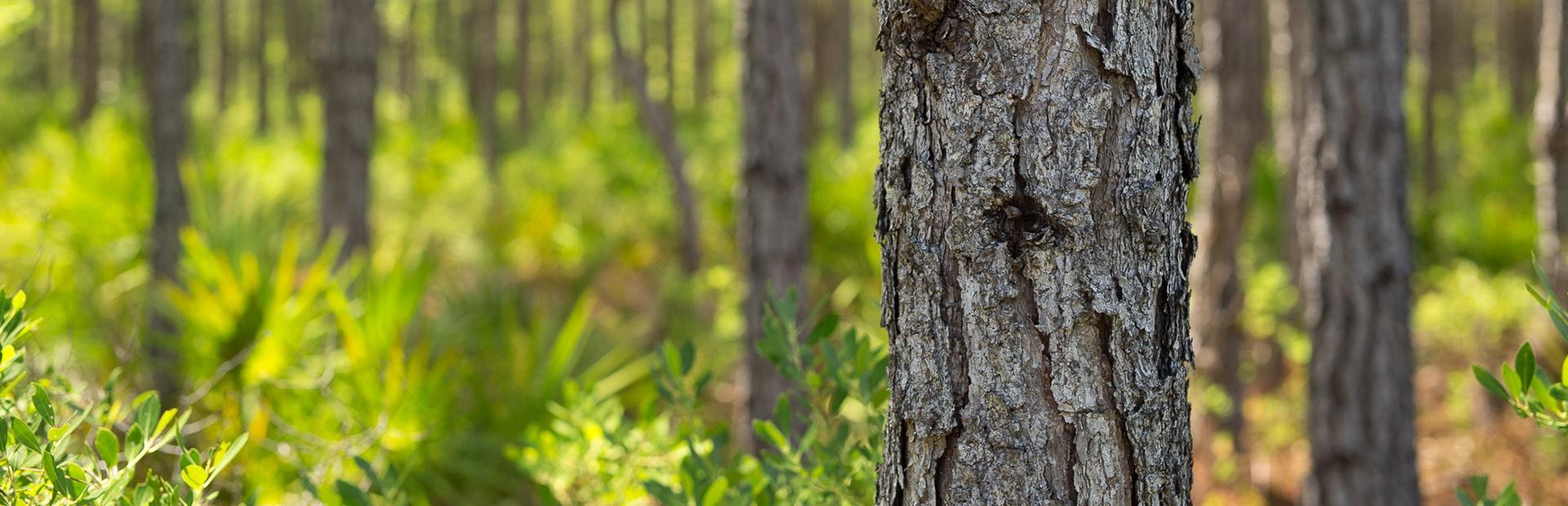 Healthy_trees_slider.jpg