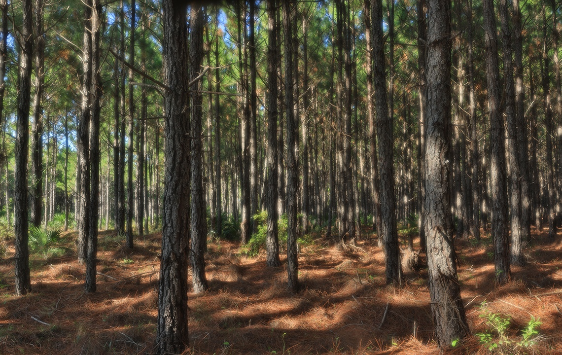 How a forester knows if trees are healthy