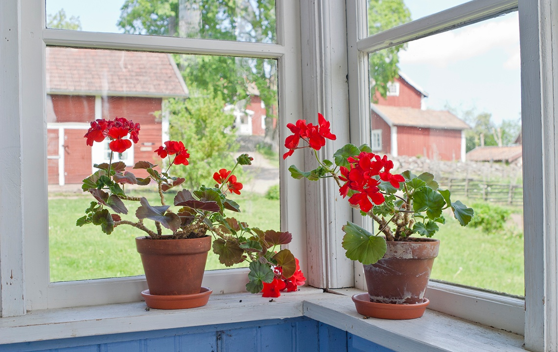 Which Plants Should You Bring Indoors For The Winter?