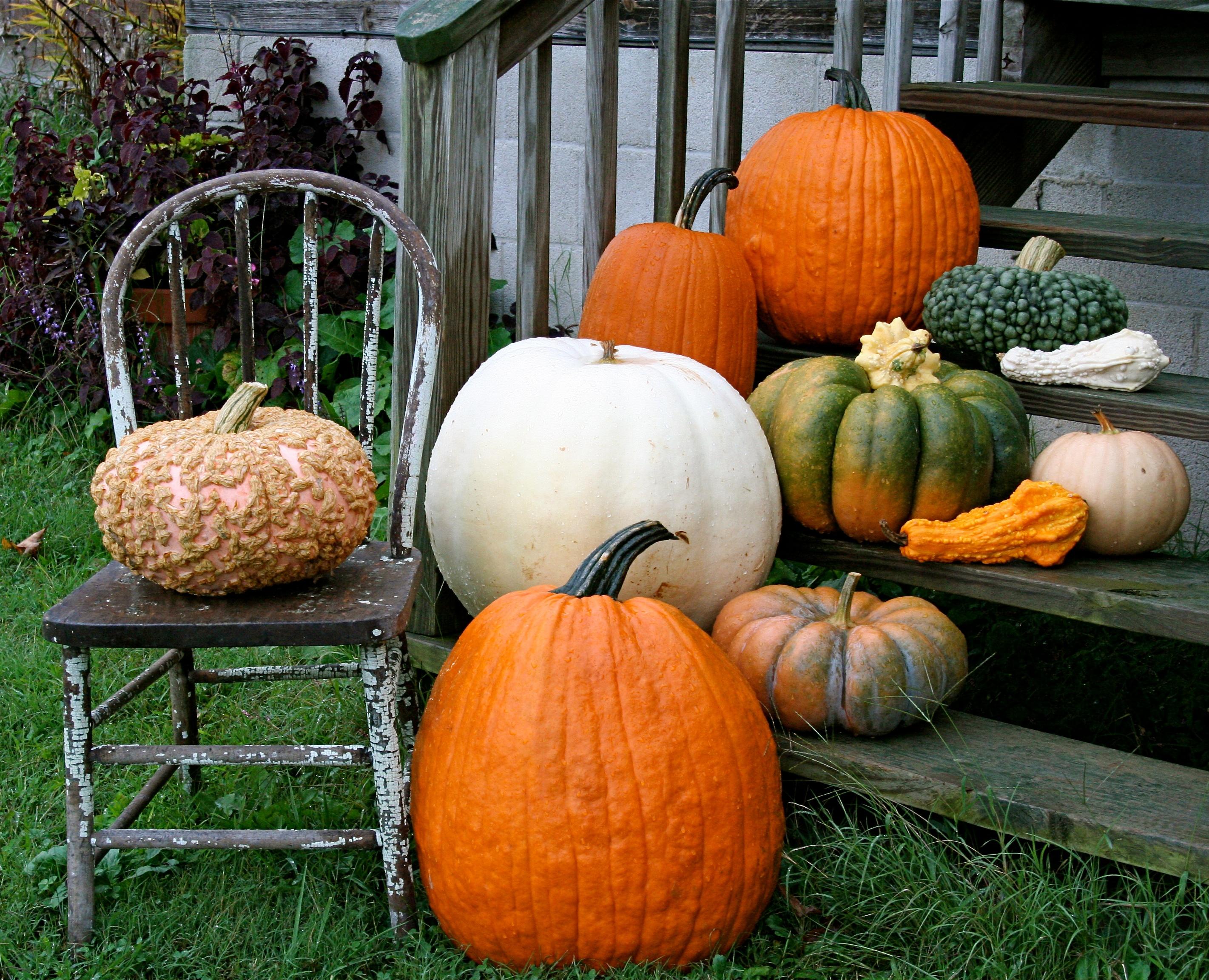 Picking the Perfect Pumpkins: a guide to heirloom pumpkin varieties