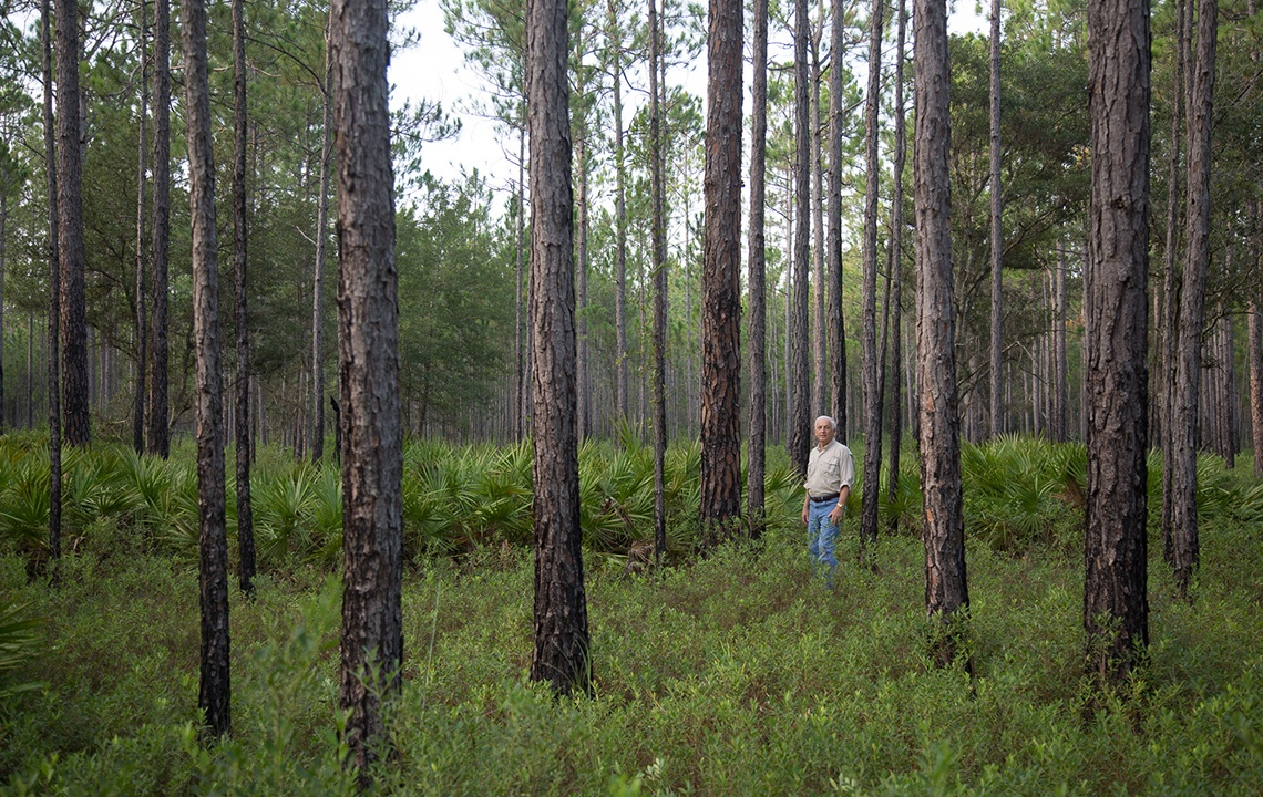 How to find the best hunting land in Florida: 8 tips