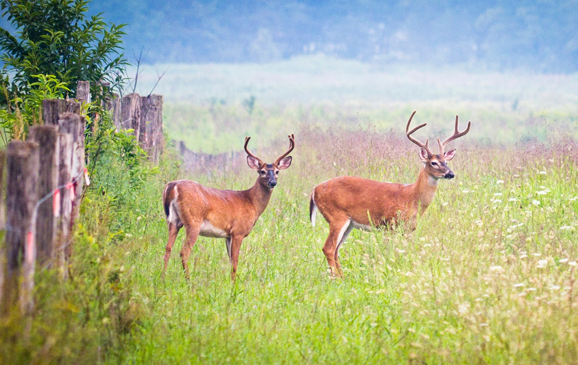 Why manage wildlife on hunting land?