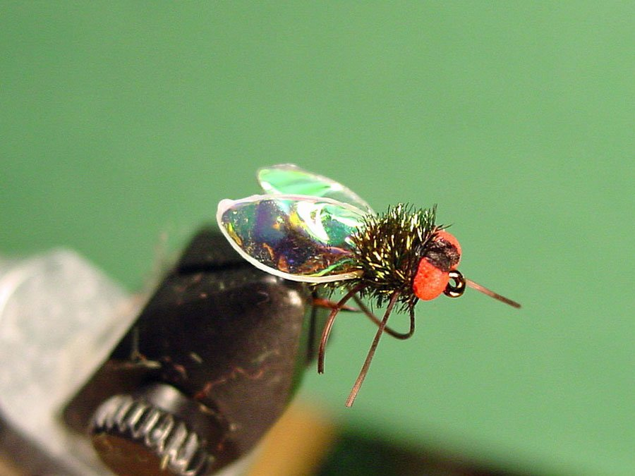 Teen masters the art of fly-tying