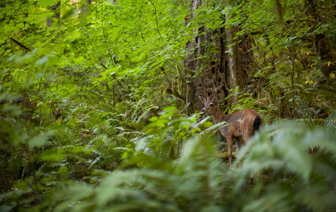 The Deer Who Wore Camo: A True Hunting Story