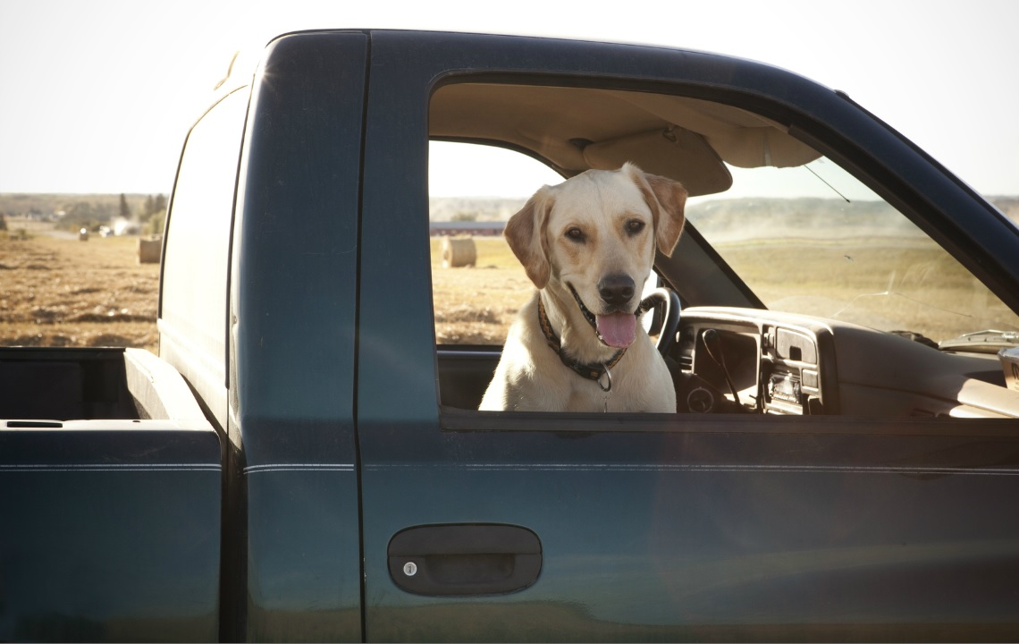 Road tripping with a dog? It's not easy with this lab