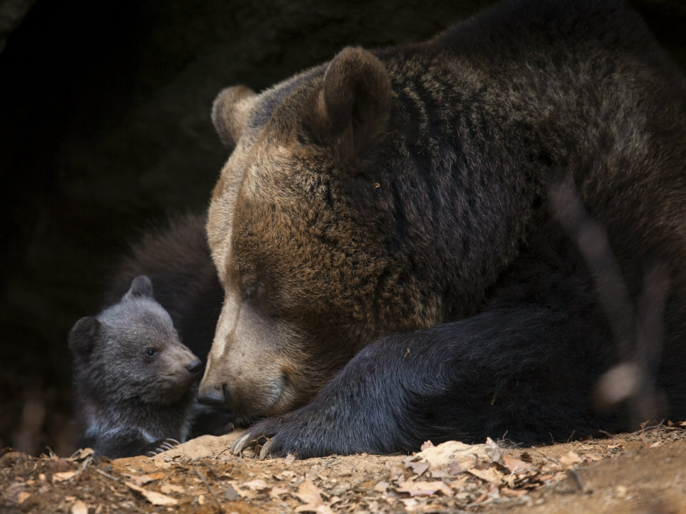 How to Coexist with Black Bears