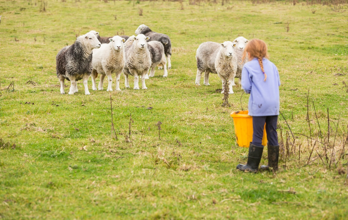 Secrets to Making Farm Chores Fun for Children of All Ages
