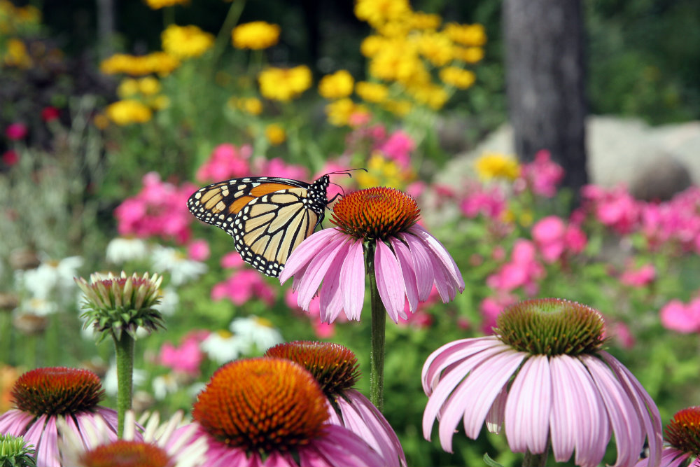 How to Plant a Pollinator Garden in the South