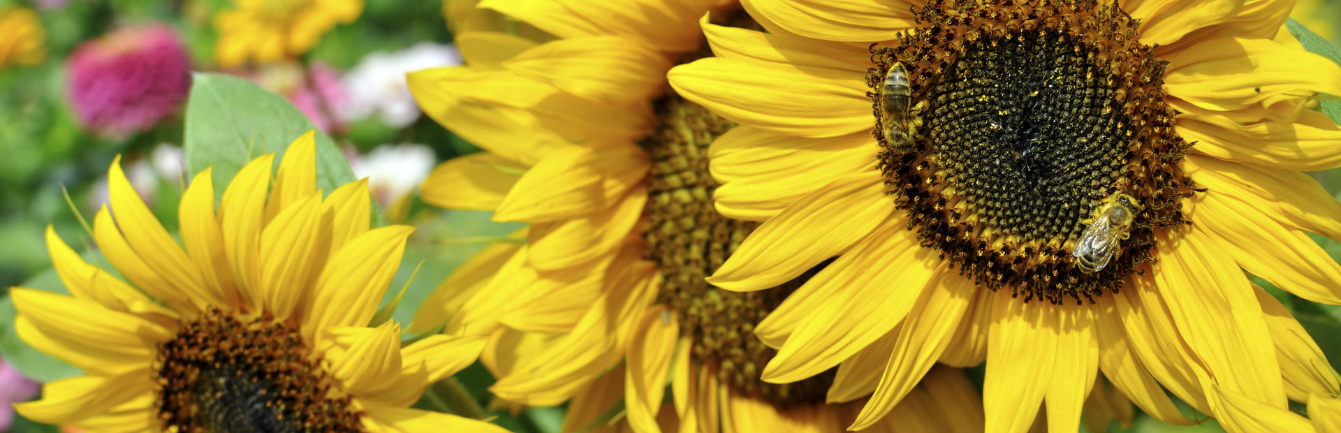How to plant a pollinator garden