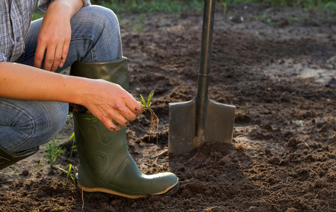 Simple fall garden prep trick = less spring weeds
