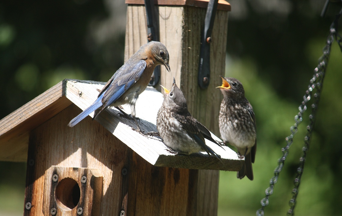 How to attract wild birds to your property