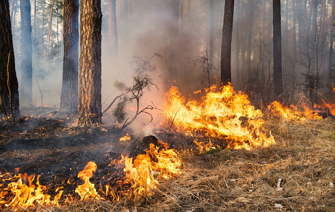 How does fire benefit landowners?