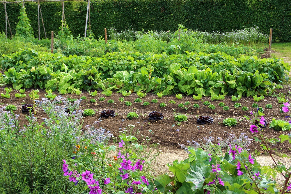 7 Tips for Starting a Master-Planned Garden on Your Land