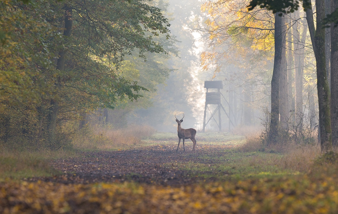 Sustainable hunting: Getting the most from the animals you harvest