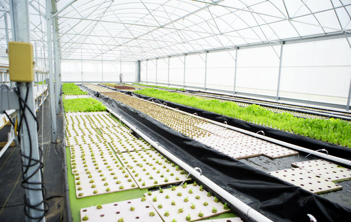 5 steps to aquaponics success | Rethink Rural Blog