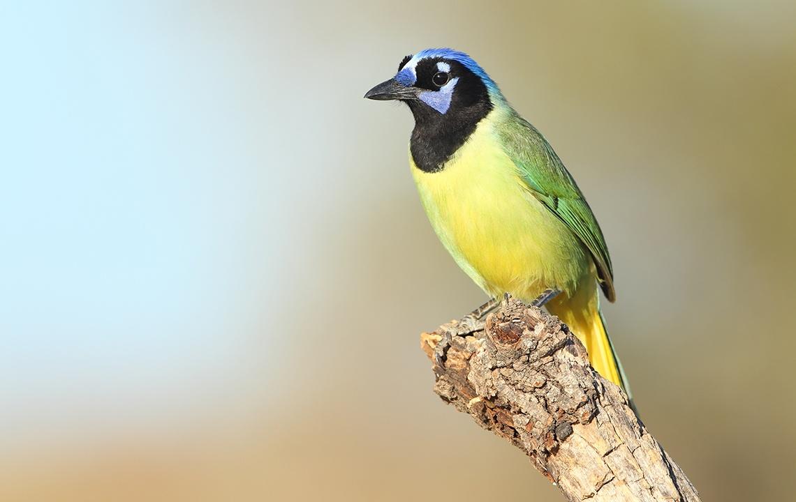Birding in South Texas, where Rare Species Flock