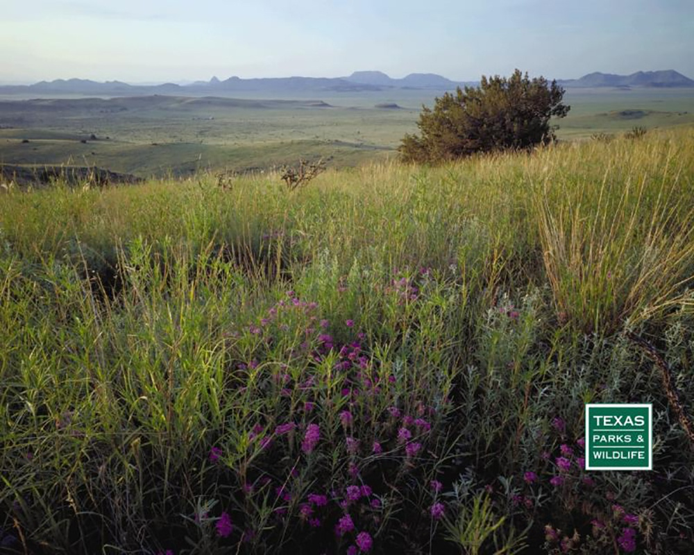 Texas State Parks: Canyons, mountains, even dino tracks