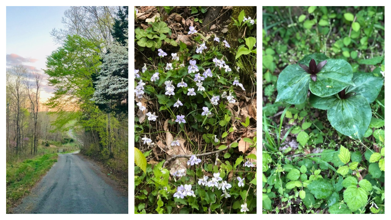 Celebrating The Wildflowers of Appalachia