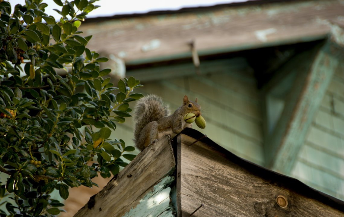 Country critter survival 101 | Rethink Rural Blog