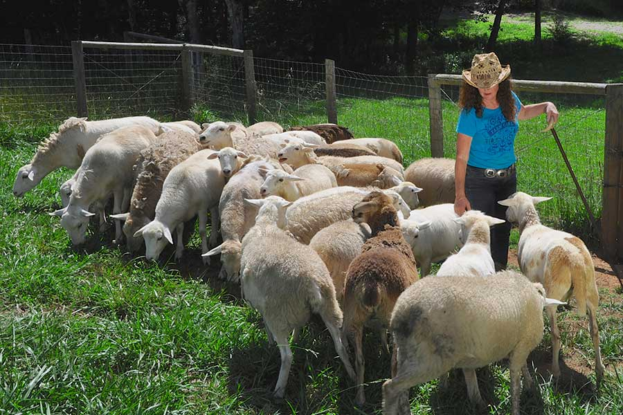 Female shepherd with her sheep