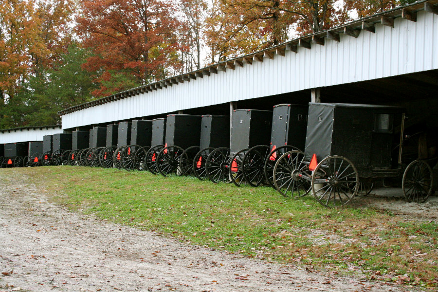 mennonite buggies