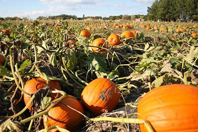 Washington Farms offers a pumpkin patch and corn maze in Georgia
