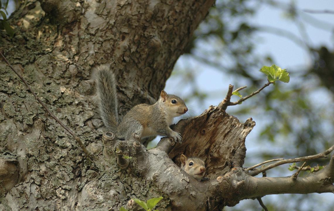 Squirrels gone wild!